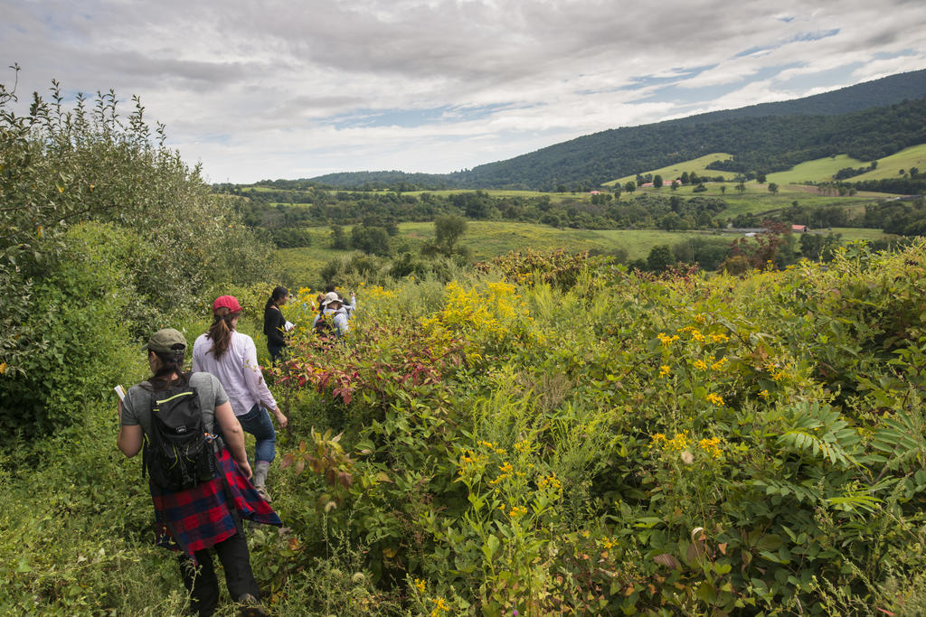 Students walk through a field at Smithsonian-Mason School of Conservation